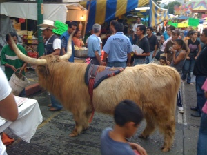 A Yak at a fair